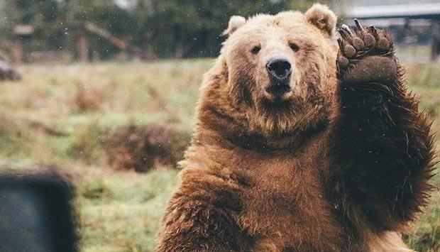 خرس ها (مستند)